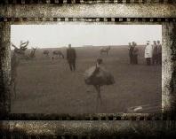 Таврида. Заповедник Аскания-Нова. 1914 г. Кинохроника. Смотреть онлайн