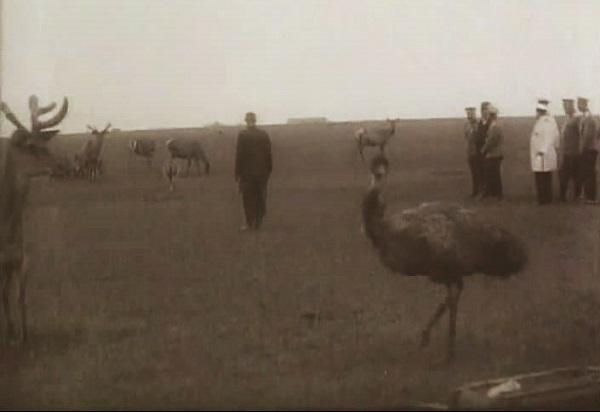 Заповедник Аскания-Нова. Фото. Кинохроника 1914 г. смотреть онлайн