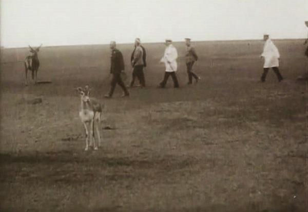 Заповедник Аскания-Нова. Фото. Видео смотреть онлайн