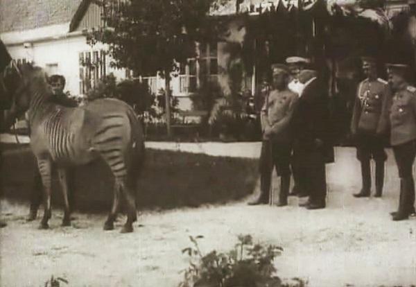 Зеброид. Заповедник Аскания-Нова. Фото. Видео смотреть онлайн
